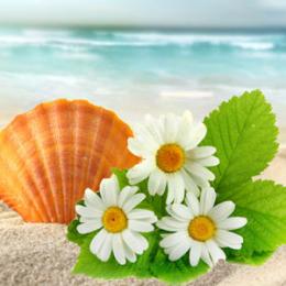 Stokrotki na plaży