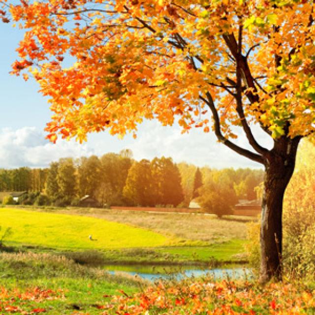 Olejek zapachowy - Jesienny las - do produkcji świec, mydła, kremów, balsamów, toników i innych kosmetyków