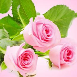 Świeżo ścięte róże 30 ml