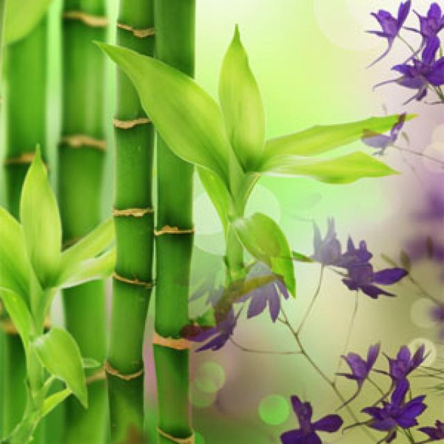 Olejek zapachowy - Australijski Bambus - do produkcji świec, mydła, kremów, balsamów, toników i innych kosmetyków
