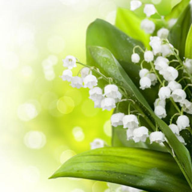 Olejek zapachowy - Konwalia - do produkcji świec, mydła, kremów, balsamów, toników i innych kosmetyków