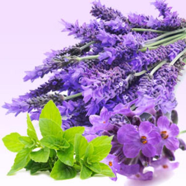 Olejek zapachowy - Lawenda i mięta - do produkcji świec, mydła, kremów, balsamów, toników i innych kosmetyków