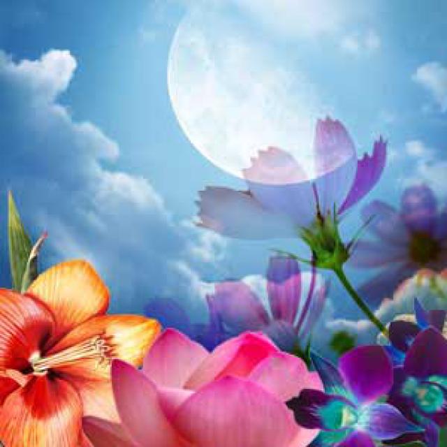 Olejek zapachowy - Księżycowy Kwiat - do produkcji świec, mydła, kremów, balsamów, toników i innych kosmetyków