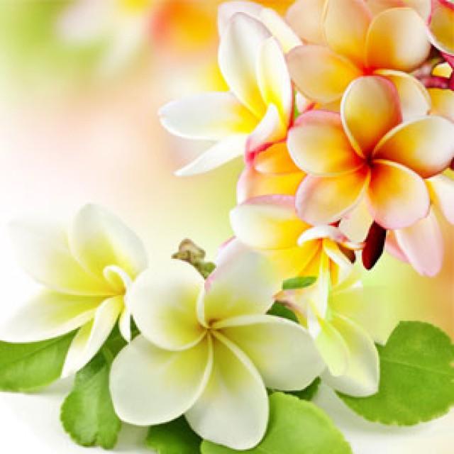 Olejek zapachowy - Pikaki - do produkcji świec, mydła, kremów, balsamów, toników i innych kosmetyków