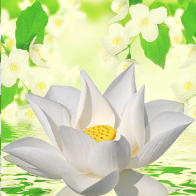 Olejek zapachowy - Dreama 30 ml - do produkcji świec, mydła, kremów, balsamów, toników i innych kosmetyków
