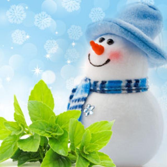 Olejek zapachowy - Jack Frost 30 ml (Dziadek Mróz) - do produkcji świec, mydła, kremów, balsamów, toników i innych kosmetyków