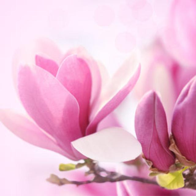 Olejek zapachowy - Magnolia 30 ml - do produkcji świec, mydła, kremów, balsamów, toników i innych kosmetyków