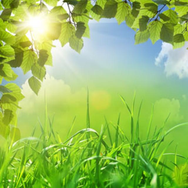 Olejek zapachowy - Sweet Grass 30 ml (Słodka trawa) - do produkcji świec, mydła, kremów, balsamów, toników i innych kosmetyków