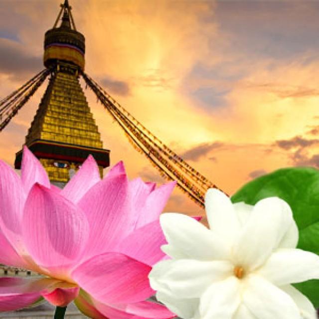 Olejek zapachowy - Bursztyn tybetański - do produkcji świec, mydła, kremów, balsamów, toników i innych kosmetyków