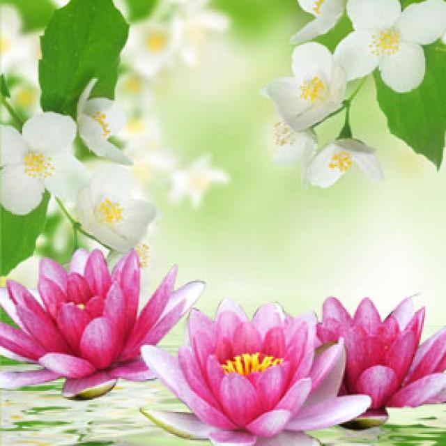 Olejek zapachowy - Lilia wodna i jaśmin - do produkcji świec, mydła, kremów, balsamów, toników i innych kosmetyków