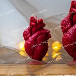 Anatomiczne serce człowieka 10 cm